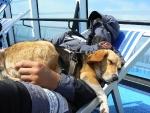 Sul traghetto per Bastia