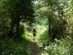 Verso la Foresta del Tartagine