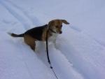 Nessie nella neve