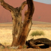 Namibia 2011: Diario di Viaggio