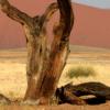 Namibia 2011: Diario di Viaggio